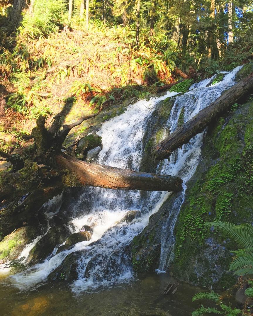 FernFallsRedwoods