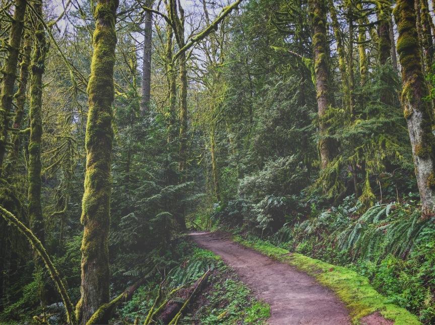 forestpark10