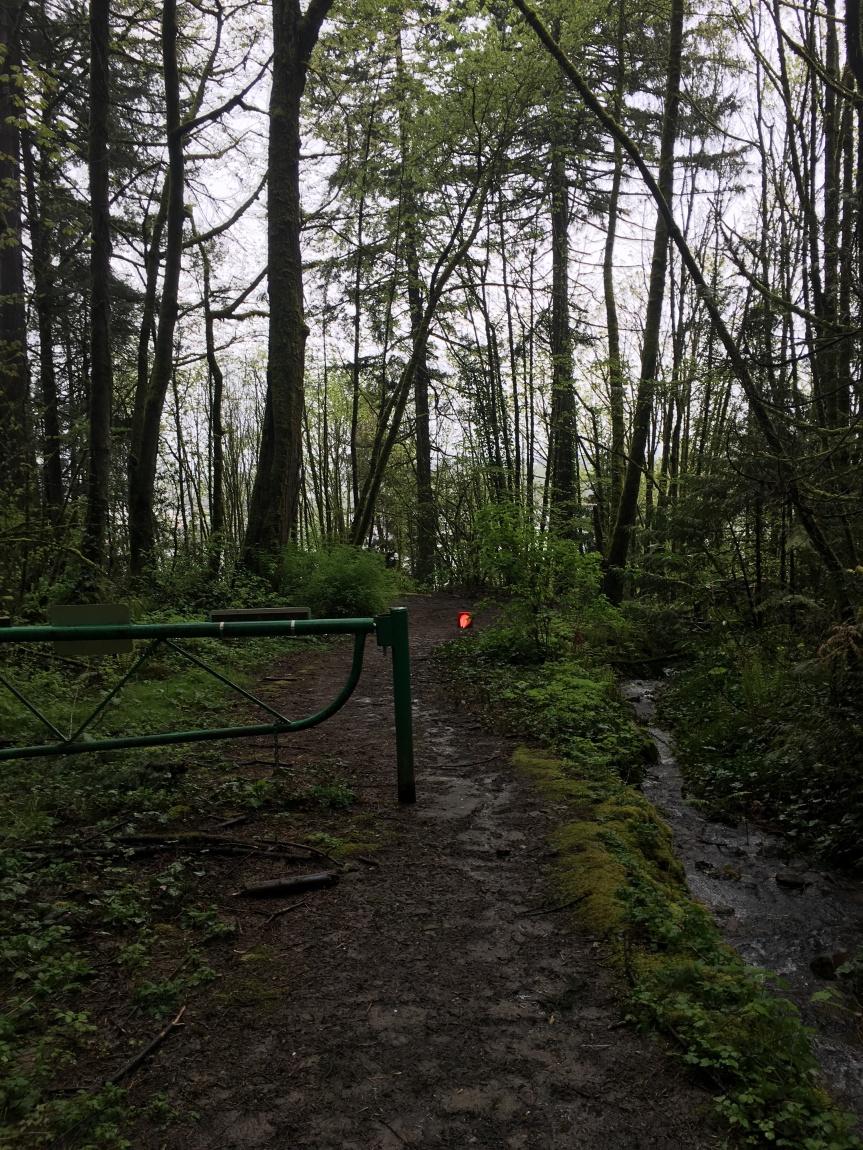 linntonloopforestpark15